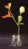 virágkő