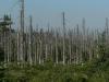 Savas eső pusztította erdő Csehországban