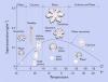 Morfológiai diagramm