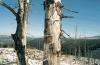 Erdőpusztulás az USA-ban